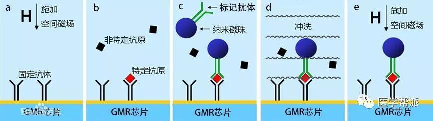 磁敏免疫分析原理.jpg