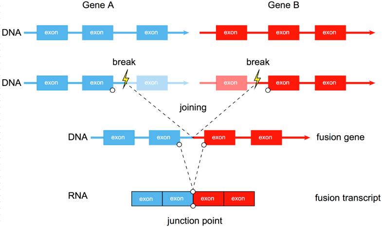"""至本医疗创新IVD--""""人类NTRK1/2/3基因变异检测试剂盒"""""""
